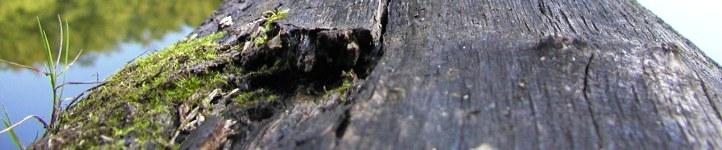 CactusCrew